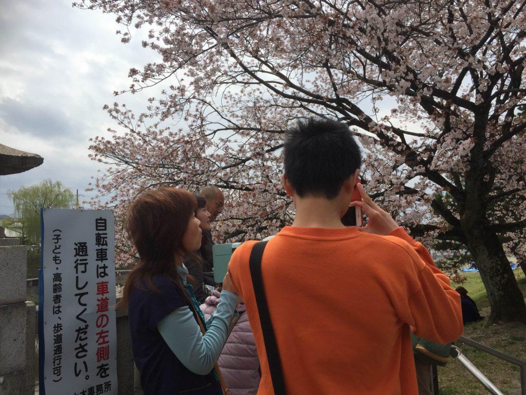 4月3日開催、お花見の報告。